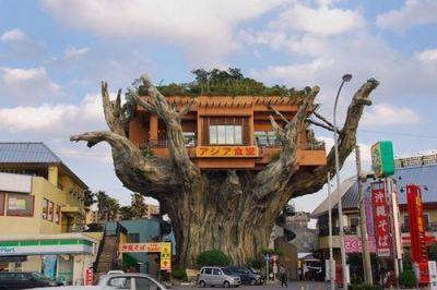 A concrete Gajumaru tree.